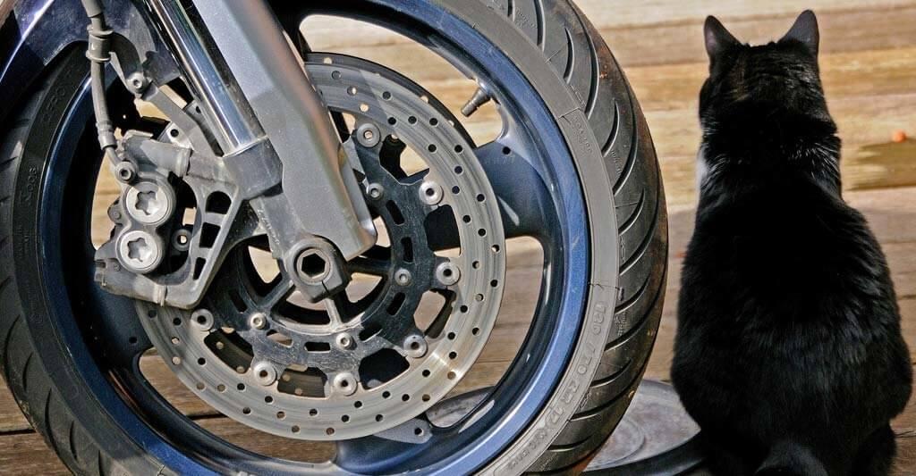 Wann Motorrad Bremsbeläge wechseln? Frage bitte nicht deine Katze.