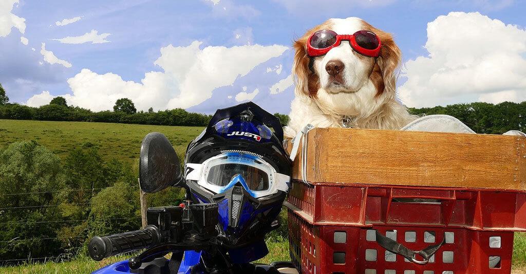 Nehme deine rosarote Brille beim Thema Motorradhelm Haltbarkeit ab. Dein Hund kann diese allerdings aufbehalten.